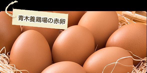 名古屋コーチン卵